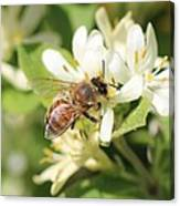 Honeybee And Honeysuckle Canvas Print