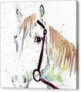 Horse Study Canvas Print