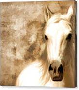 Horse Whisper Canvas Print