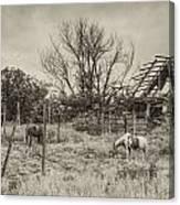 Horses And Barn Canvas Print