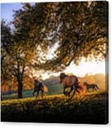 Horses Running At Sunset, Baden Canvas Print