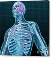 Human Skeleton And Brain, Artwork Canvas Print