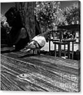 Hungry Pigeon At Mcdonalds Bw Canvas Print