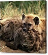 Hyene Tachetee Crocuta Crocuta Canvas Print