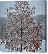 Iced Tree Canvas Print