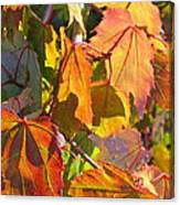 Illumining Autumn Canvas Print
