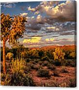 In The Golden Hour  Canvas Print