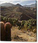 Indian Canyons Canvas Print