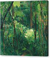 Interior Of A Forest Canvas Print