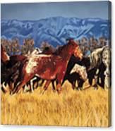 Joe's Horses Canvas Print