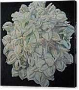 Joshua Tree Bloom Mandala Canvas Print