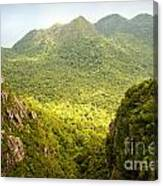 Jungle Landscape Canvas Print