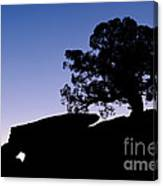 Juniper Tree At Dawn Canvas Print