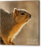 Just Curious Canvas Print