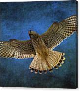 Kestrel Canvas Print