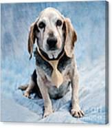 Kippy Beagle Senior Canvas Print