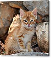 Kitten In Hydra Island Canvas Print