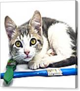 Kitten With Paint Brushes Canvas Print