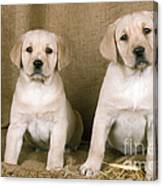 Labrador Retriever Puppies Canvas Print