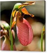 Lady Slippers At Moore State Park 2 Canvas Print