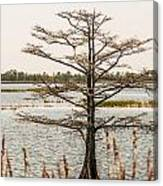 Lake Mattamuskeet Nature Trees And Lants In Spring Time  Canvas Print
