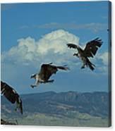 Landing Pattern Of The Osprey Canvas Print