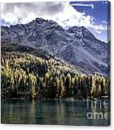 Larch Pine Reflections Canvas Print