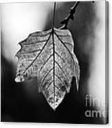 Last Standing Leaf Canvas Print