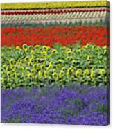 Lavender Farm, Furano, Hokkaido Canvas Print