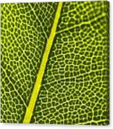 Leafy Details Canvas Print