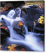 Leaves In Little River Great Smoky Canvas Print