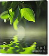 Leaves Over Water Canvas Print