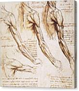 Leonardo: Anatomy, 1510 Canvas Print