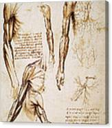 Leonardo: Anatomy, C1510 Canvas Print