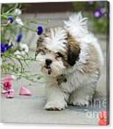Lhasa Apso Puppy Canvas Print