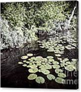 Lily Pads On Dark Water Canvas Print