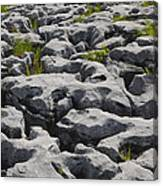 Limestone In The Burren Canvas Print