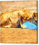 Lioness Drinking Canvas Print