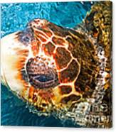 Loggerhead Sea Turtle Canvas Print
