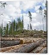 Logpile At A Clear Cut Area Canvas Print