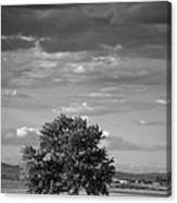Lone Tree Wilder Idaho Canvas Print