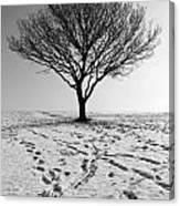 Lone Tree Winter Canvas Print