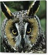 Long-eared Owl Up Close Canvas Print