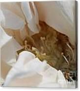 Long-stemmed White Rose Canvas Print
