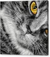 Look Into My Eyes Canvas Print