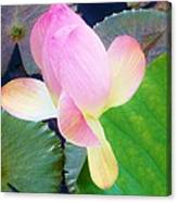 Lotus Lilly Canvas Print