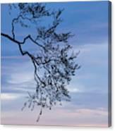 Low Angle View Of Tree At Dawn, Dark Canvas Print