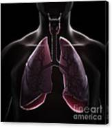 Lung Anatomy Canvas Print