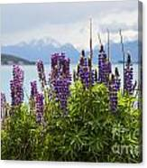 Lupin Blooms Canvas Print