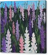 Lupines - Art By Bill Tomsa Canvas Print